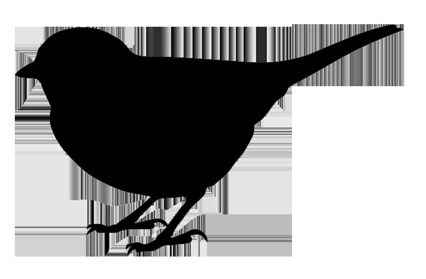 Bird Silhouettes Bird silhouette, Bird drawings