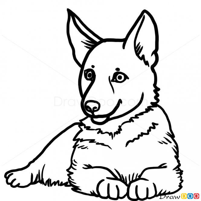 how to draw puppy german shepherd dogs and puppies drawings