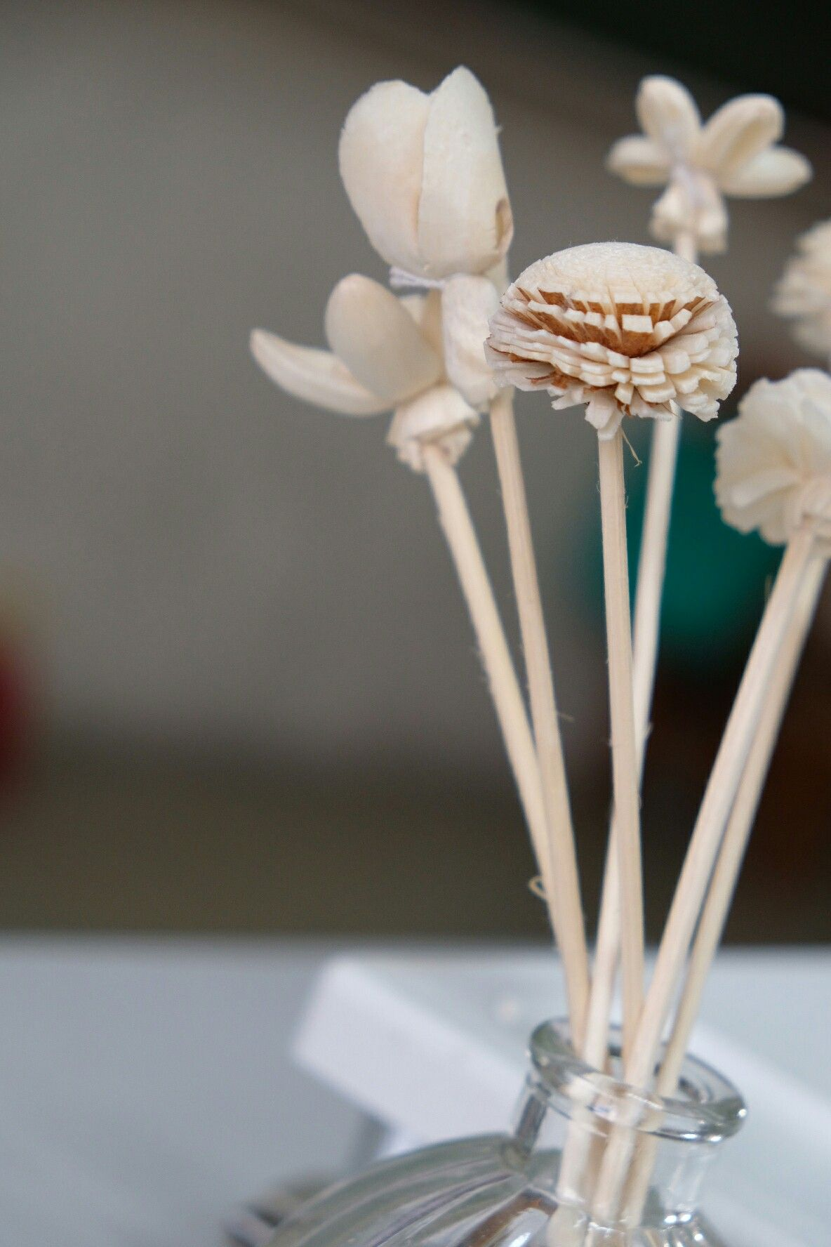 Pin by Joanne Lu on photography Reed diffuser, Diffuser