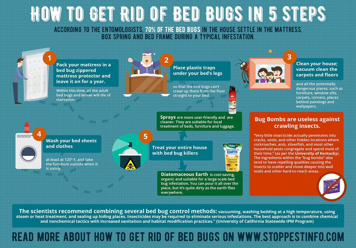 How to Get Rid of Bed Bugs with Bombs and Foggers. Does it
