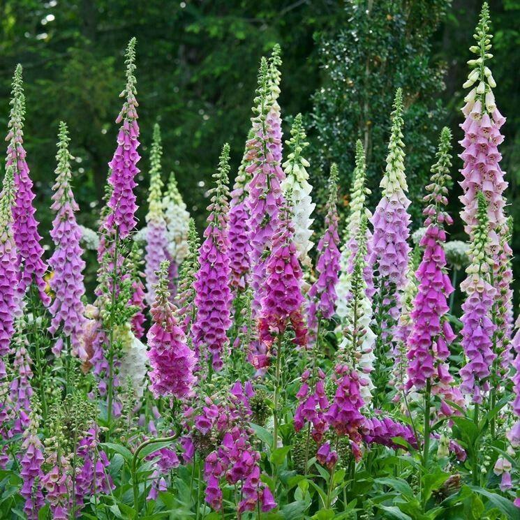 13 Lush Spring Wedding Decorations To Bring To Life Your: Flowers Perennials, Garden Shrubs, Garden Seeds