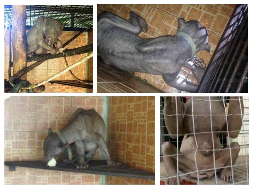 وحش مرعب يهاجم قرية سيبو في جزيرة بورنيو ماليزيا Weird Animals Animals Strange