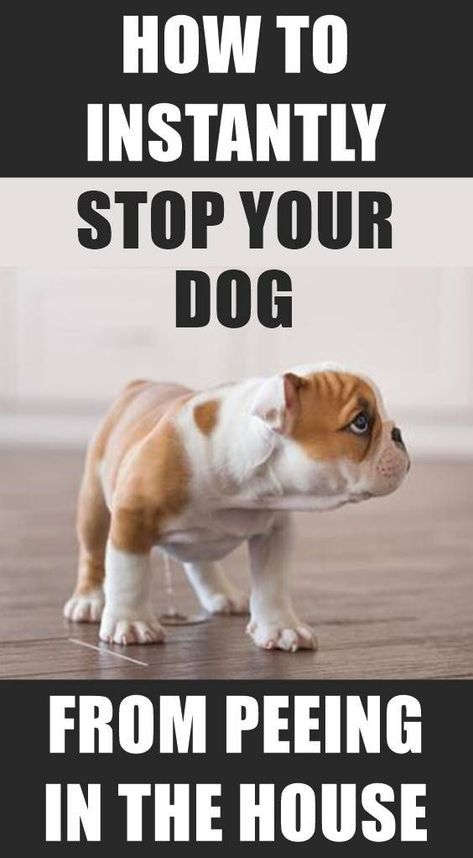 Is Your Dog Peeing Inside Here S An Effective Way That Ll Stop Your Dog From Peeing In The House Instant Dog Potty Training Puppy Training Training Your Puppy