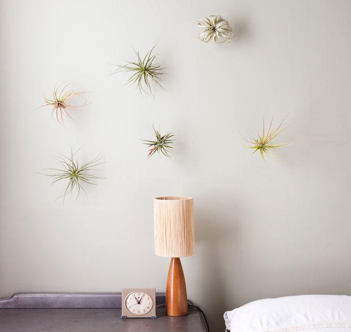 Growing Up Dearest Nature Airplant Wall Vertical Garden Diy Flora Grubb