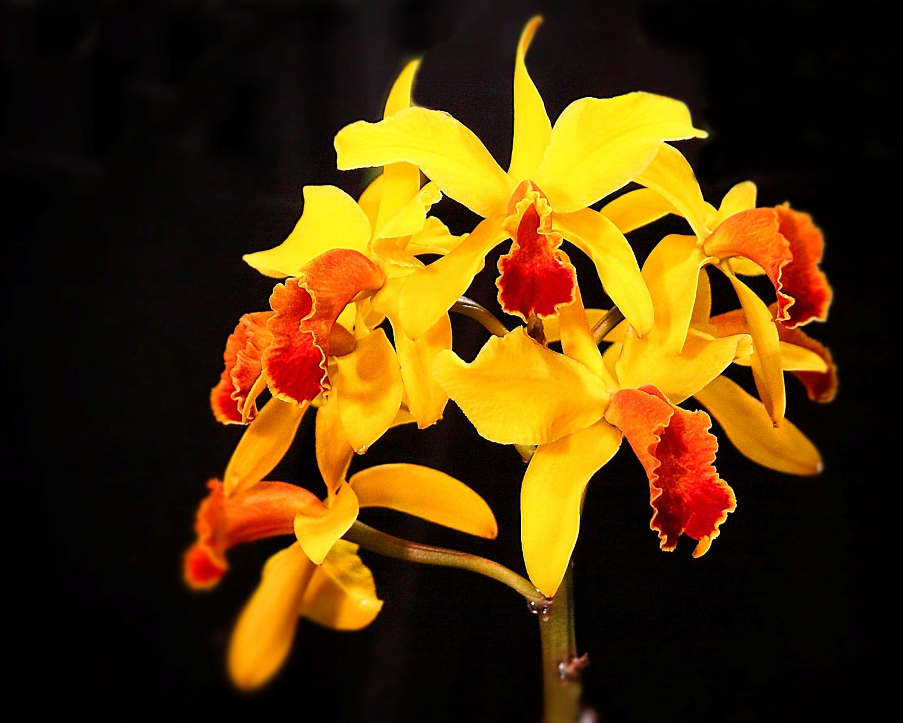 Yellow orchids flowers pinterest yellow orchid and orchid