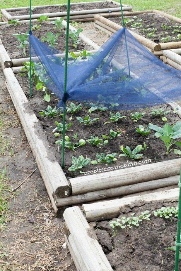 Diy Garden Shade Cloth Shade Garden Shade Cloth Garden Diy Garden