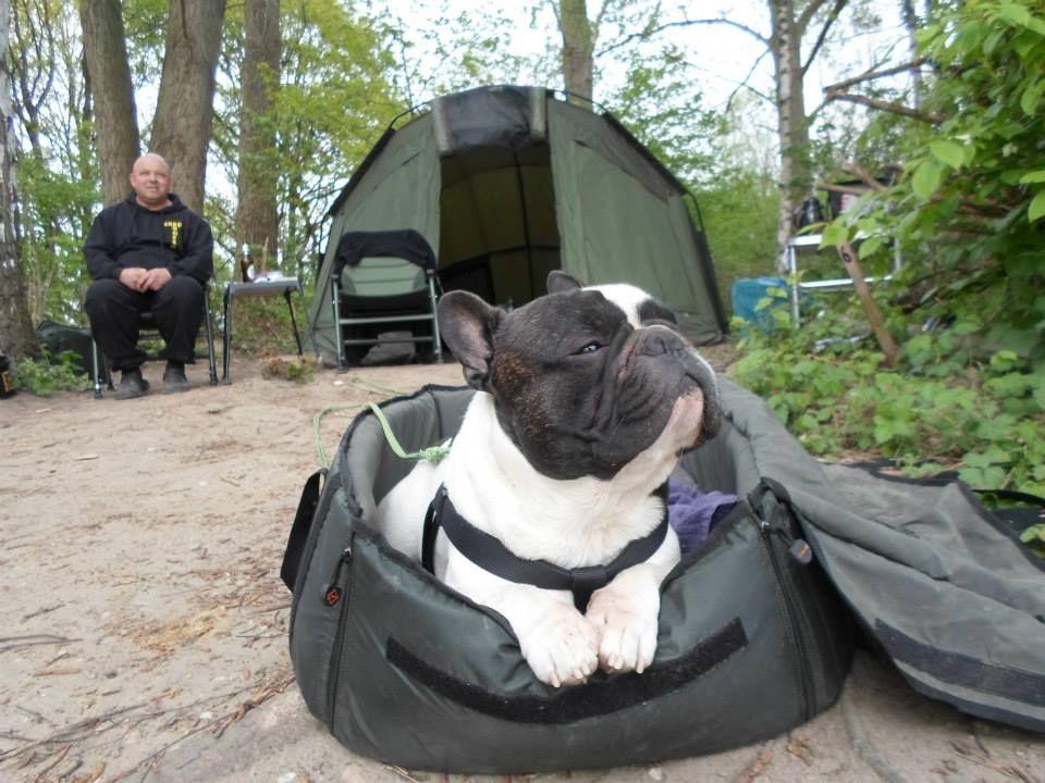 """Ahhhh, Smell that fresh Air"", French Bulldog Camping."