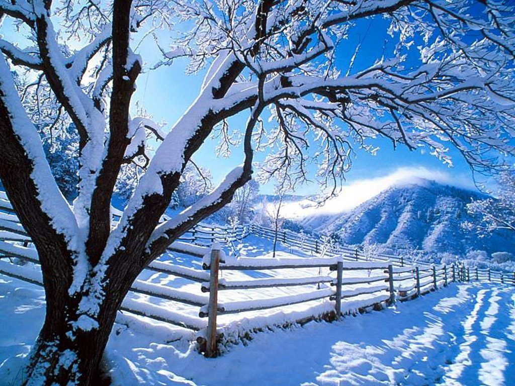 Free Winter Desktop Backgrounds Desktop Computer Laptop Notebook Smart Phon Winter Winter Wallpapers Winter Scenery Winter Nature Winter Wallpaper
