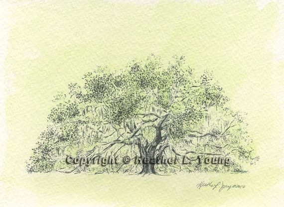 We are getting married under this amazing tree!!!! Majestic Live Oak Tree Drawing Art Print with Green by theinklab, $35.00