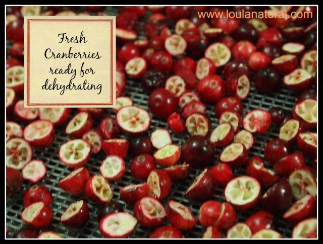 Homemade Dried Cranberries dehydrating Loula Natural