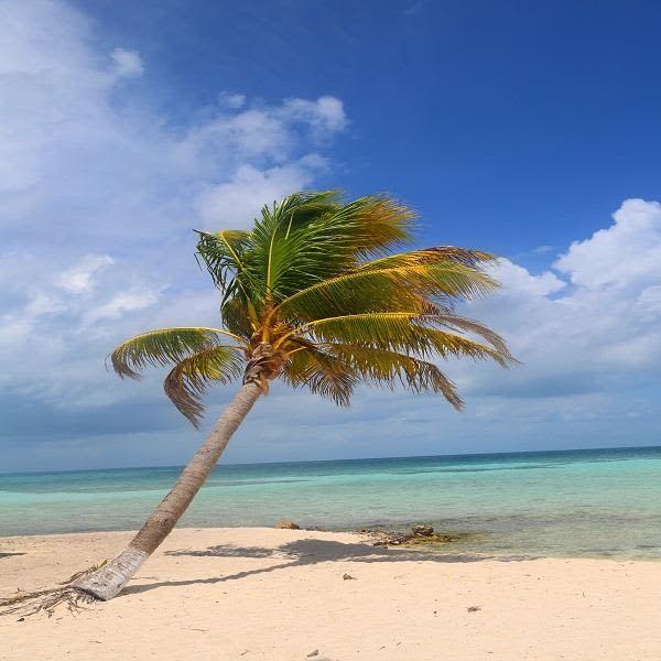 Desert Island Beach: Goff Caye Beach Break With Snorkeling