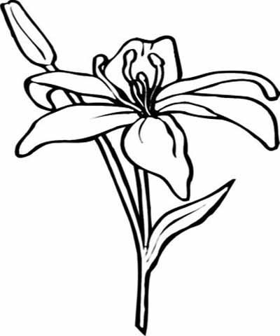 flower page printable coloring sheets amaryllis coloring pages and printables