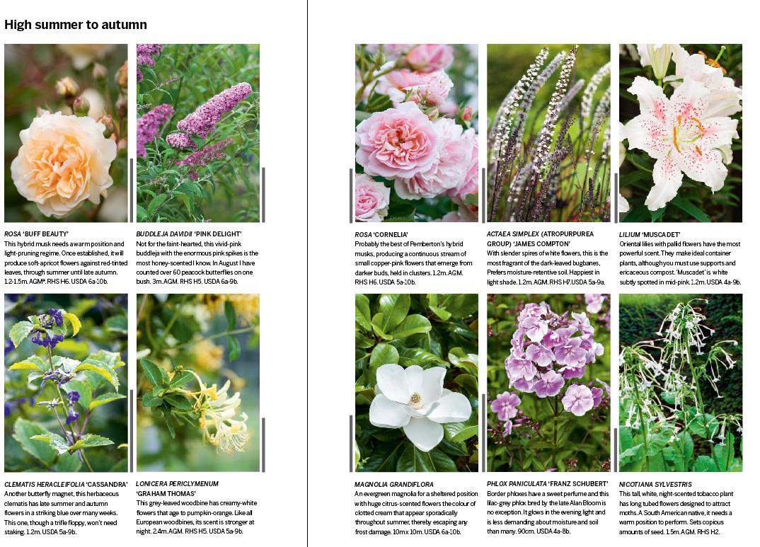 26 Of The Best Scented Flowers Scent Garden Flowering Trees Plants