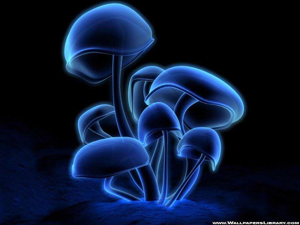 Mushroom wallpaper, Glowing mushrooms ...