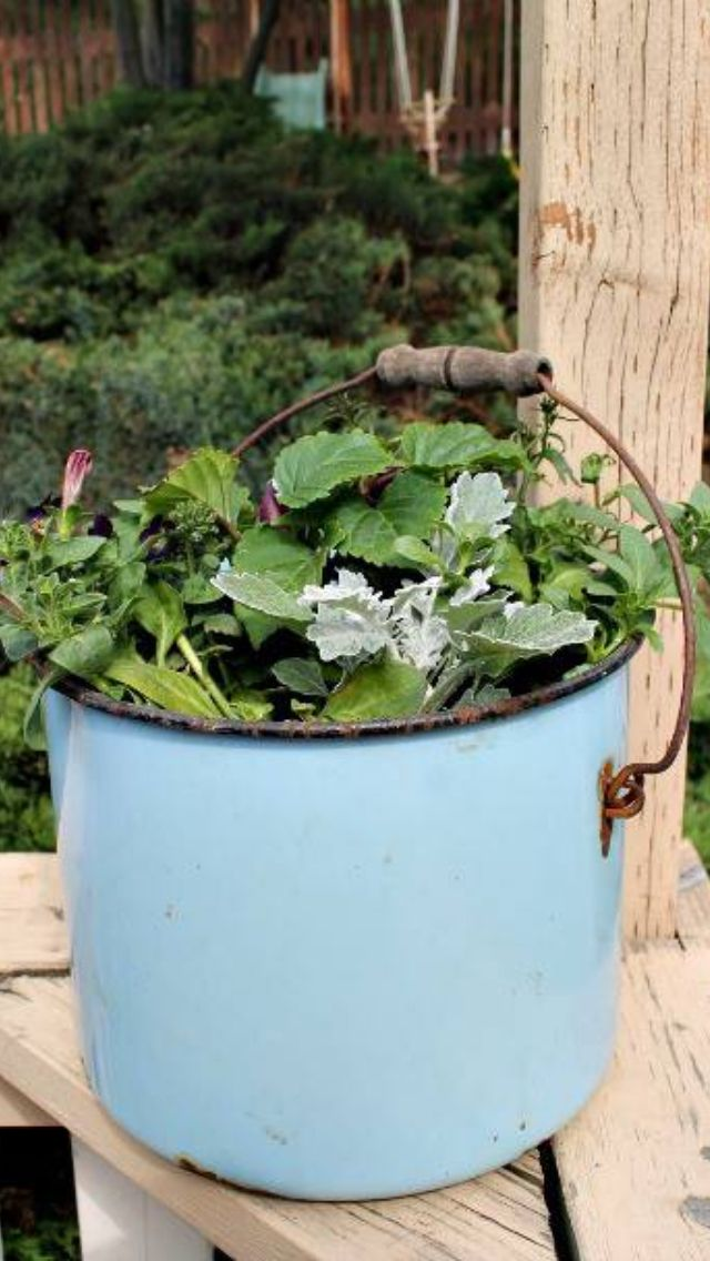 Old Cooking Pot Planter Plants Gardening 101 Planting Flowers