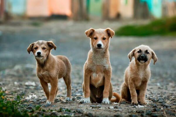 Pin auf Hundeblog