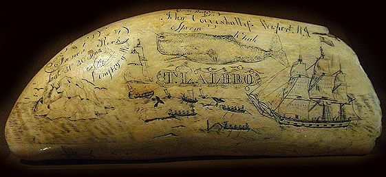 Antico Whale Tooth Scrimshaw