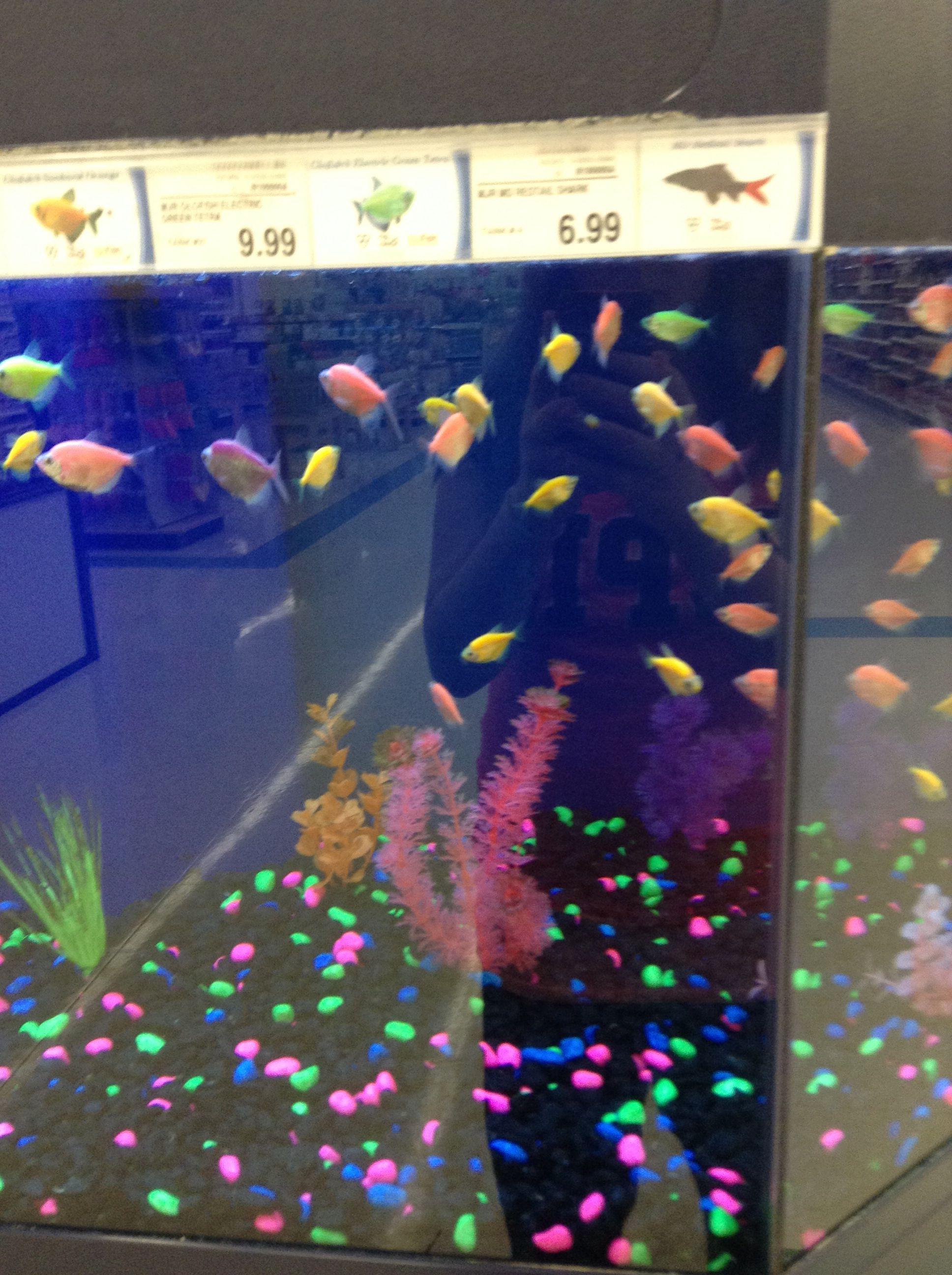 Types of pet fish at walmart for Types of fish at walmart