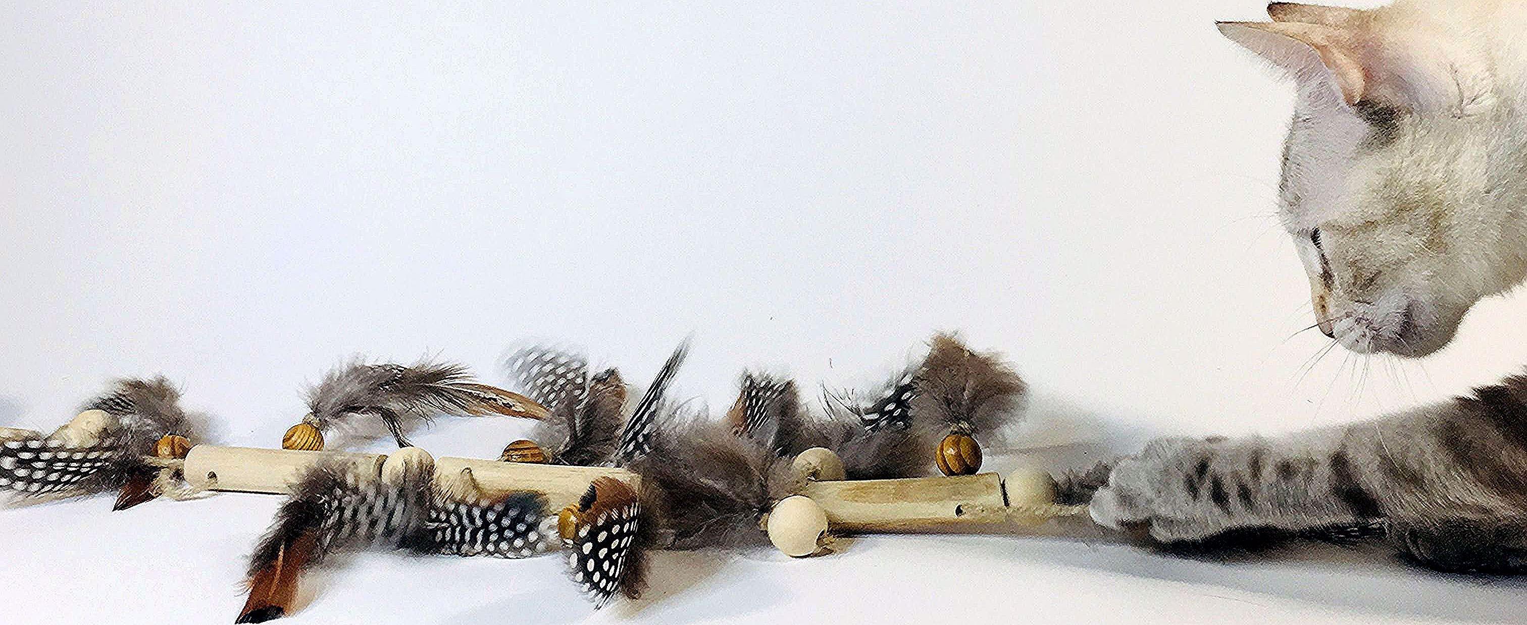 Enlever Brou De Noix Mains jouet naturel pour chats   cactus plants, cactus, plants