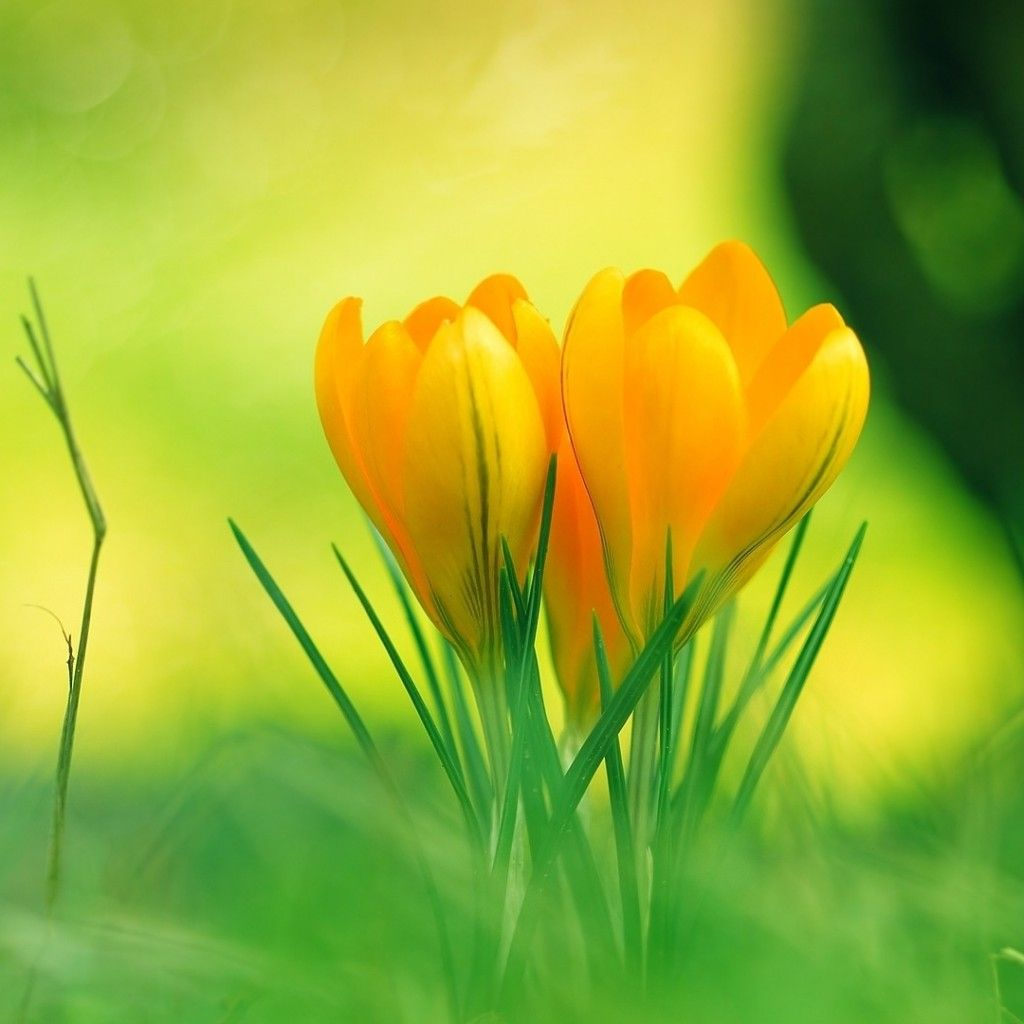 Cute Yellow Flowers On Grass Alice Stand By 2 Pinterest Grasses