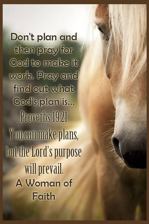 His purpose will prevail | Bible Verses | Proverbs 19, Bible ...