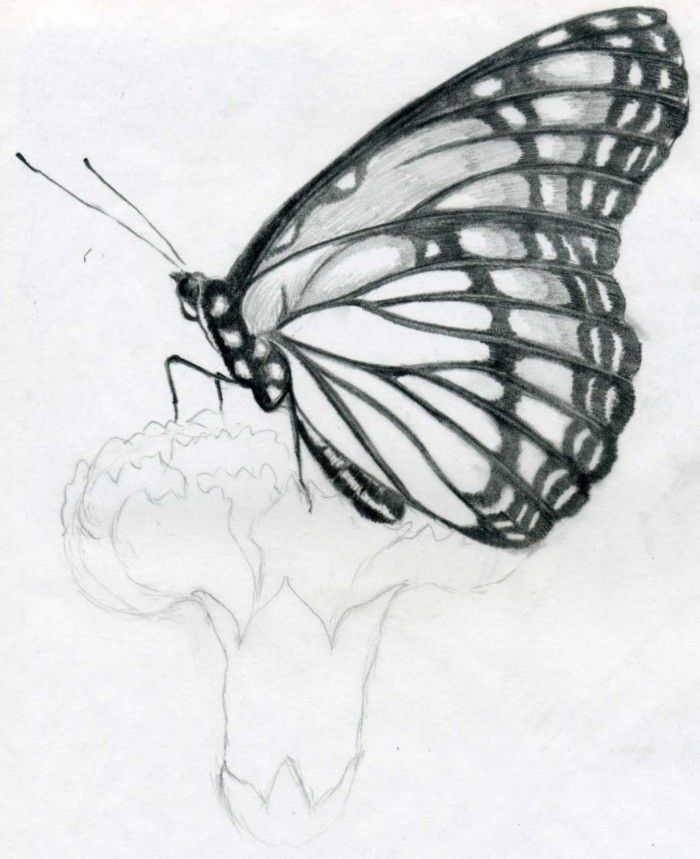 how to draw a butterfly drawing sitting on flower in