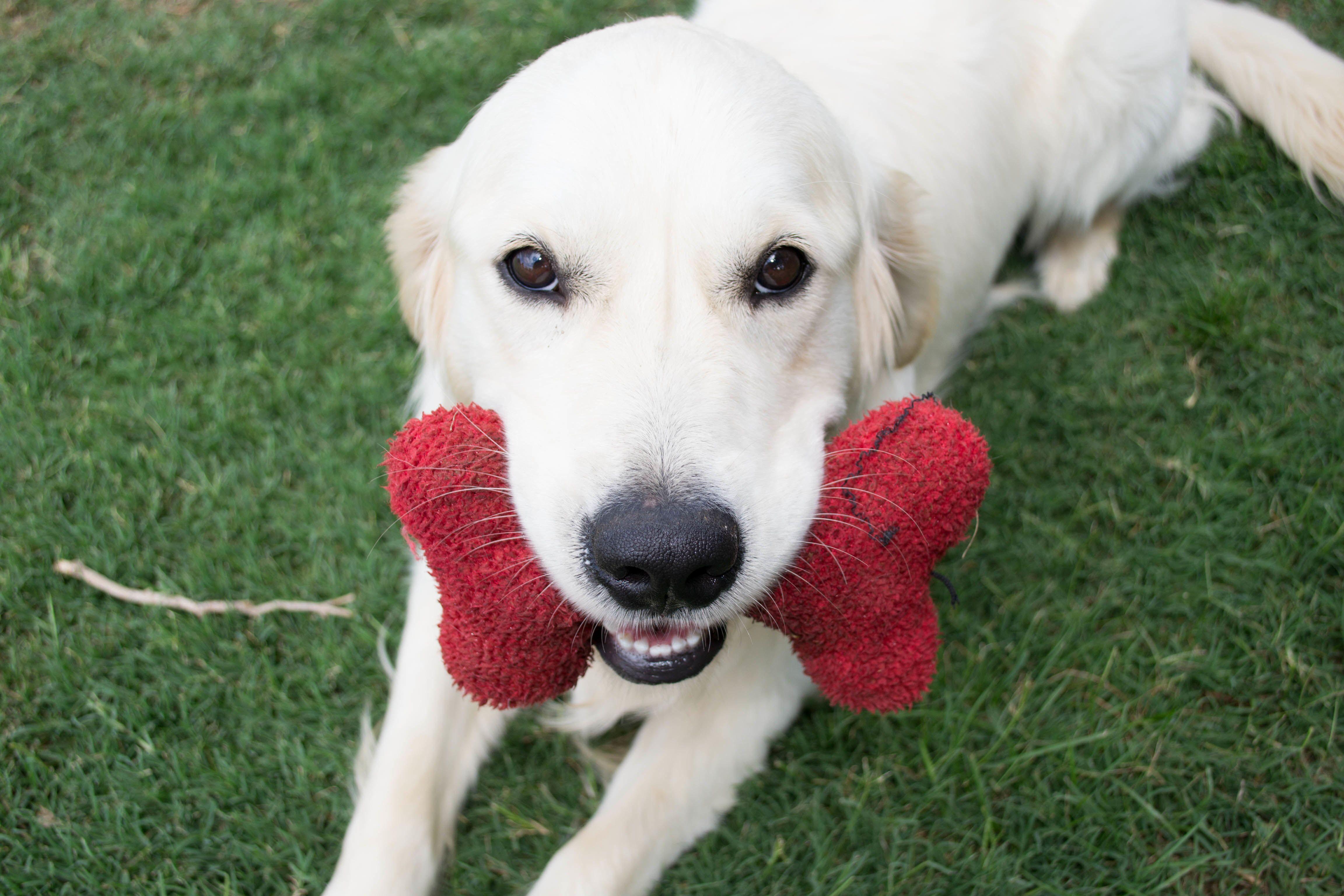 Happy pup! Love animal photography melbourne pet