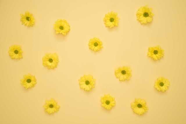The Journey Begins Yellow background, Yellow daisies