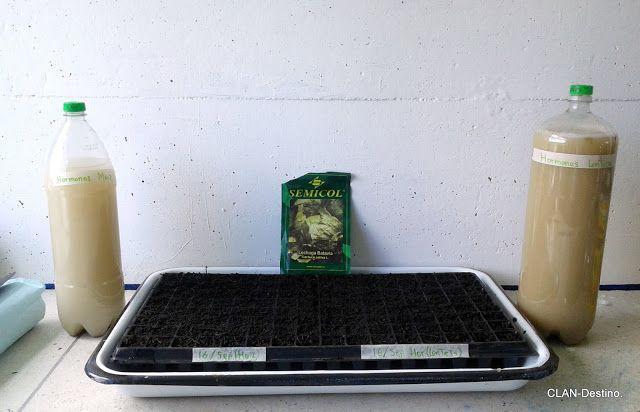 Hormonas vegetales y crecimiento de plantas.