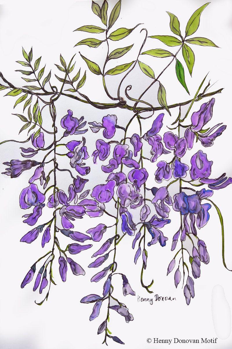 Water Colour Sketch Henny Donovan Flower Stencil Art Botanical Illustration