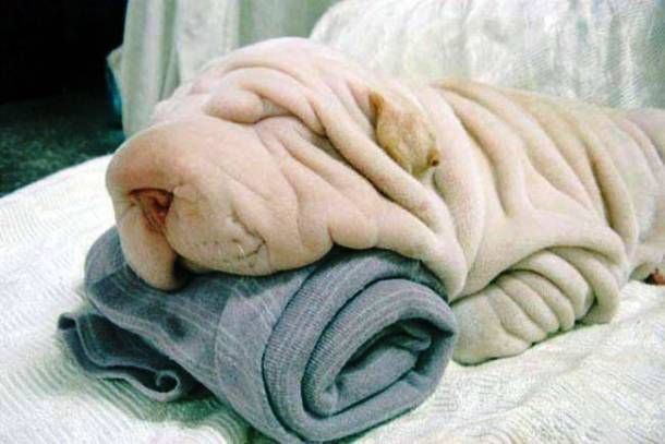 Just two crumpled towels here - no dogs, sorry.