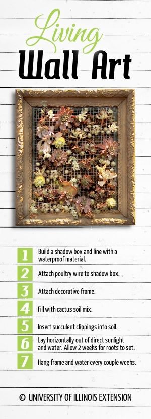 DIY Project: Living Wall Art by Miss Pearl