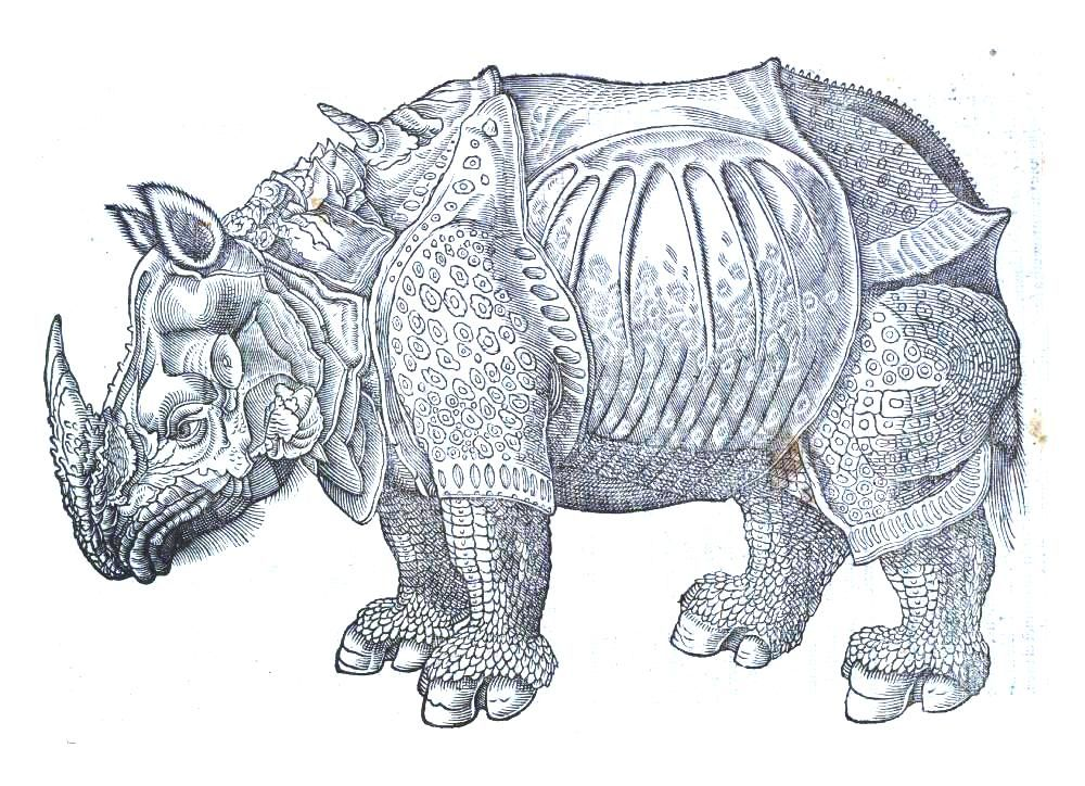 Crazy Rhino with lots of little details to color crazy colors - fresh realistic rhino coloring pages