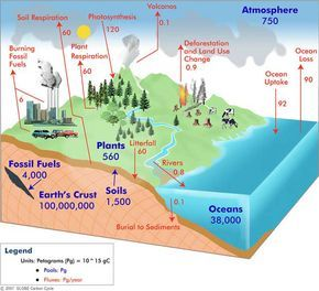 Carbon Cycle Diagram Carbon Cycle School Climate Nitrogen Cycle