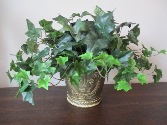 Ivy Plant Floral Greenery Decor Artificial Foliage Centerpiece Potted Plant Fleur De Lis Neutral Color Embossed Pot Home Accent 2 K35 is part of Ivy Plant decor - Large Ivy Plant Potted in Fleur De Lis Container Centerpiece  Welcome to ForeverBloomsByLori where you will find beautiful products at great prices!  This luscious Ivy plant looks so real you're tempted to water it!   Finished on all four sides, it's beautiful vines would look great anywhere   in an office, den, bedroom, or wherever you need some plant life   The plant is professional grade quality, and has pretty dark green leaves with lighter new growth leaves,  just as Mother Nature's own   Measures 12  tall and 22  wide, in a beautiful beige tin container embossed with scrolls and Fleur De Lis design    It's a year round accent that will give you years of enjoyment with no worries about watering!    With over 2000 happy customers, you can order with confidence   Ships in 13 business days in a recycled box   Thanks for visiting!   The flowers and plant are referred to as  silk    a description used throughout the industry to describe artificial flowers and plants   They are, however, made from a fabric blend of poly, rayon, acetate, or other fibers, not from silk