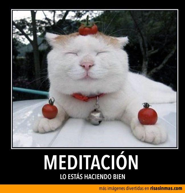 Meditación, lo estás haciendo bien.