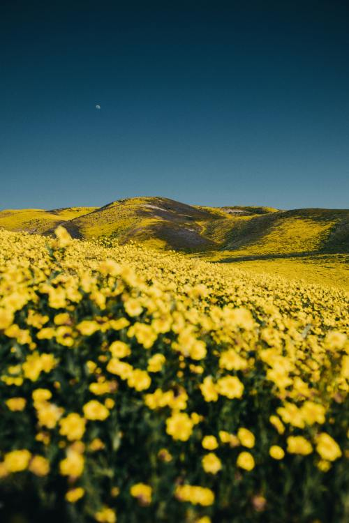 Lens Perspectives In 2020 Landscape Nature Flower Pictures