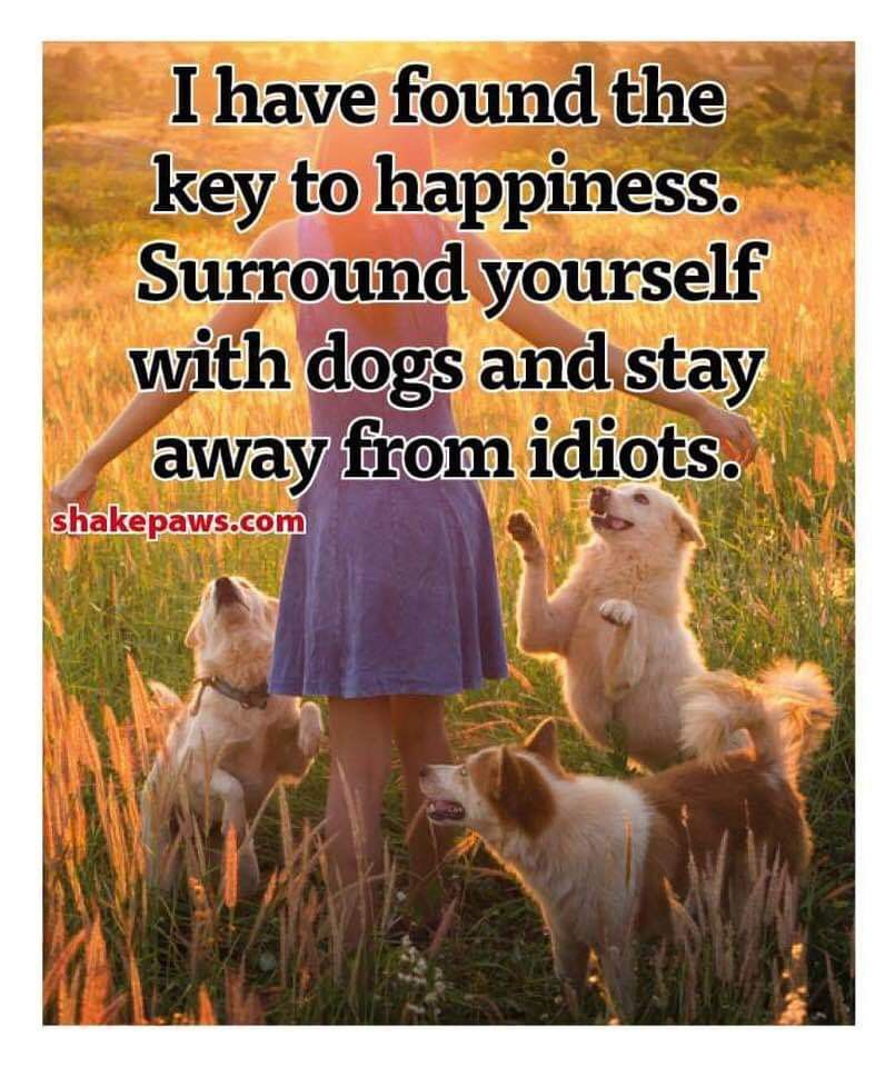 Pin by Michelle Johnson on Puppy Love Dogs, Yorkie poo