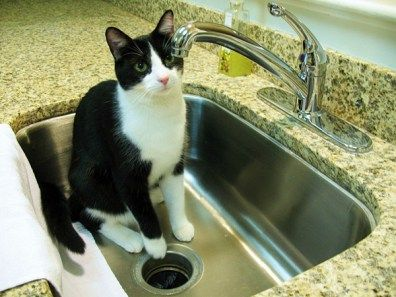 What's the big attraction? | Keeping Your Cat Off the Kitchen Counter