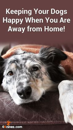 Keeping Your Dogs Happy When You Are Away From Home Pancreatitis
