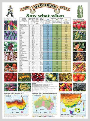 Diggers Sow What When Poster Jpg 300 400 Pixels Organic Vegetable Garden Planting Guide Australia Organic Gardening Tips