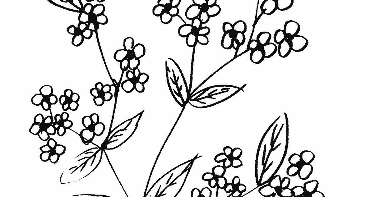 Gambar Bunga Sakura Yang Sederhana Gambar Bunga Sakura Wiring Diagram Database Download 10 Gambar Sketsa Bunga Sakura 3d Gambar Bunga Bunga Bunga Sakura