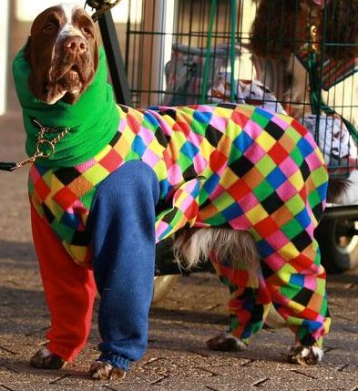 Dog onesie Pajamas