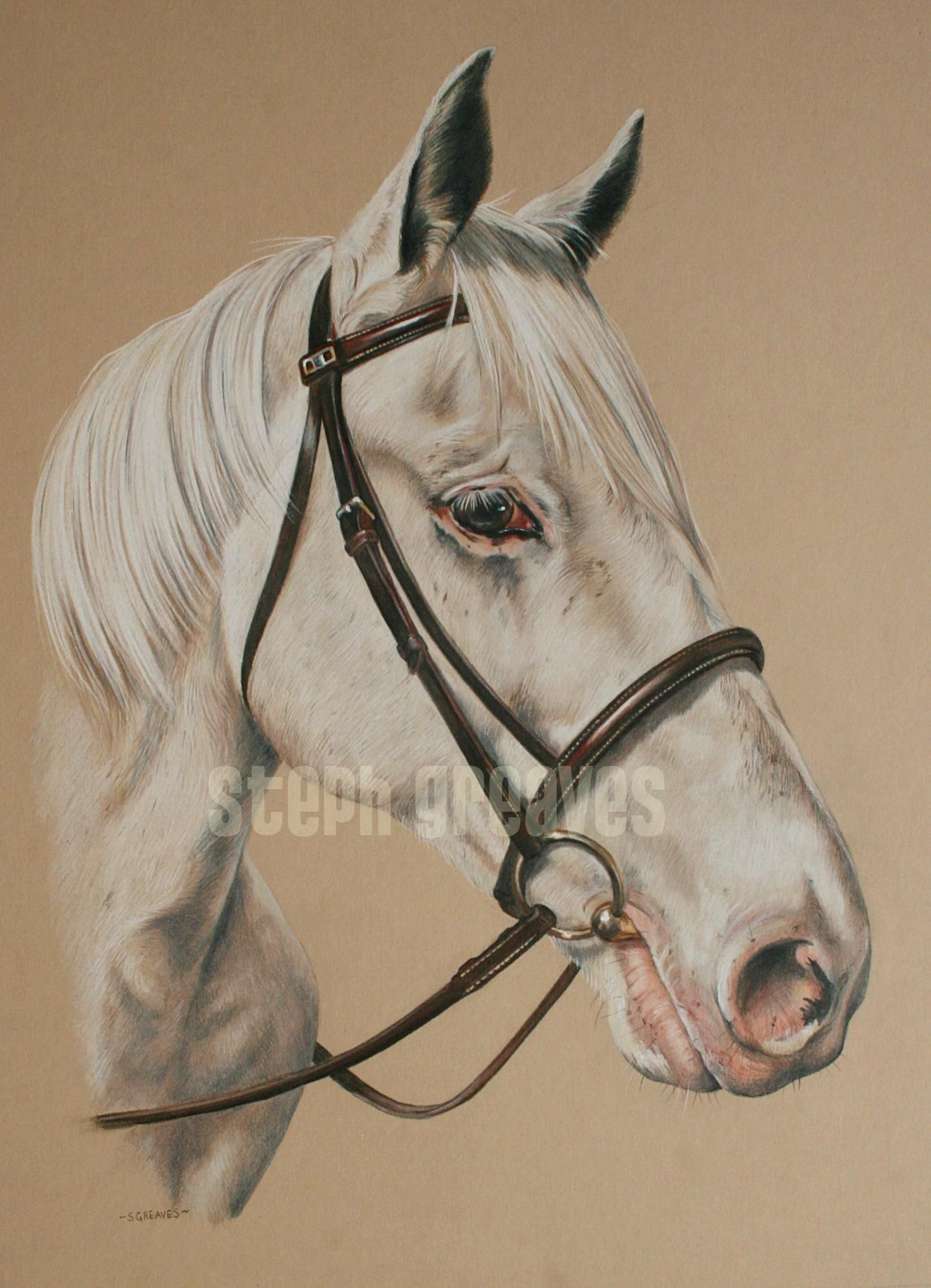 Horse in coloured pencil by http://stephaniegreaves.co.uk https://www.facebook.com/photo.php?fbid=682035275172363&set=pb.101899346519295.-2207520000.1390341343.&type=3&theater