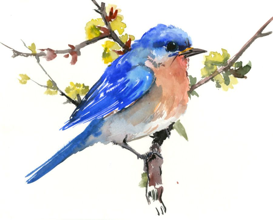 Eastern Bluebird Original Watercolor Painting Bird Watching