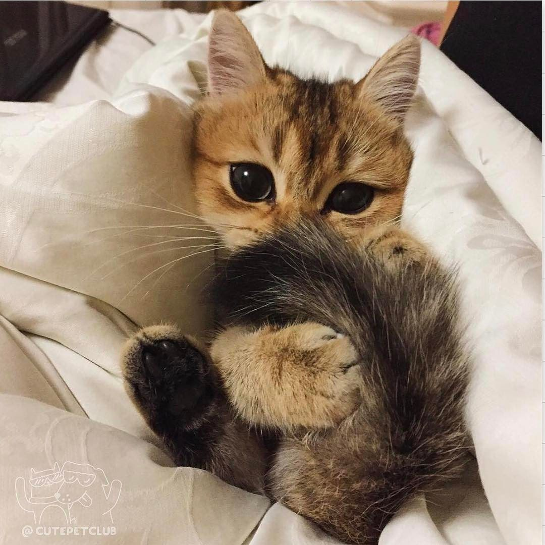 From missandeiya Стесняшка cutepetclub source ift