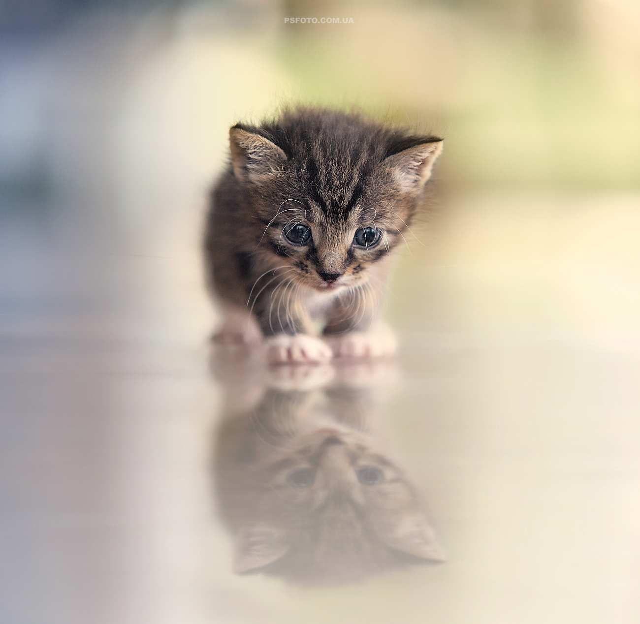 Stunning Animal Portraits By Sergey Polyushko Inspiration - This photographer is celebrating stray cats through majestic portrait photographs
