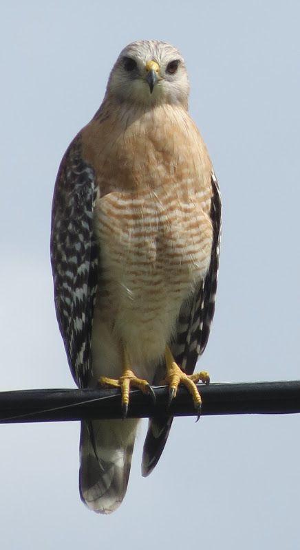 Birdseyeviews Welaka Florida Fall Visit Bird Species Bird Watchers Species