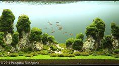 2011 AGA Aquascaping Contest - Entry #90
