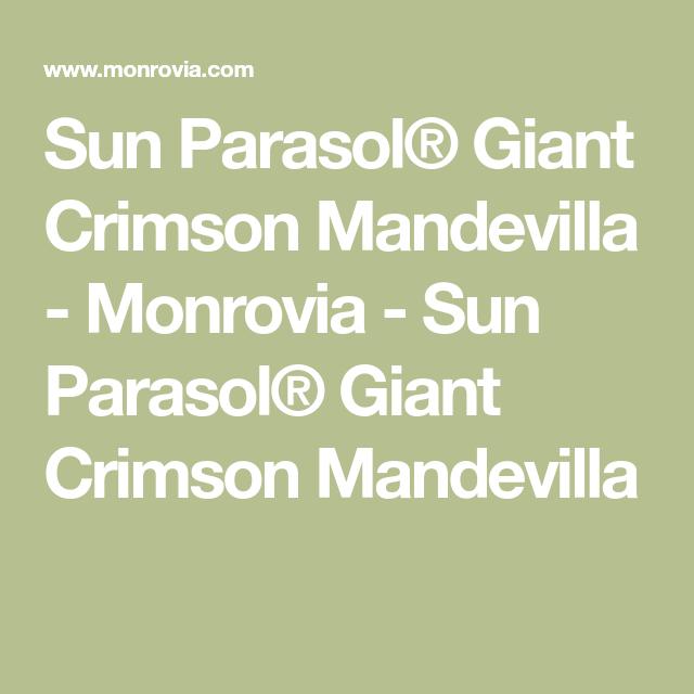 Sun Parasol Giant Crimson Mandevilla Monrovia Sun Parasol
